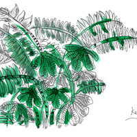 A sketch from the Kew garden